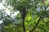 Έπεισε την ΑΤΤΙΚΟ ΜΕΤΡΟ να μεταμφυτεύσει δένδρα της πλ. Αγ. Ελεούσας
