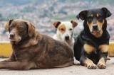 Κτηνίατρος για τα αδέσποτα από το δήμο Αγ. Παρασκευής