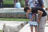 Καταπέλτης για το απαράδεκτο νομοσχέδιο για τα ζώα ο δήμος Αθηναίων