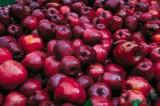 Δέσμευσε 2.380 κιλά μήλα η Περιφέρεια Αττικής