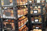 Διένειμε 36 τόνους ροδάκινα  ο Δήμος Θηβαίων