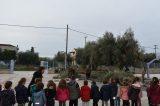 Εθελοντές στην Πάτρα μαζεύουν τις ελιές σε σχολεία