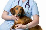 Σεμινάριο για τη διάσωση σκύλων στα Βριλήσσια