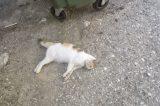 Δηλητηριάσεις γατιών στην Πεντέλη