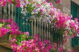 Διαγωνισμός για τον «καλύτερο κήπο» & το «καλύτερο μπαλκόνι» στα Χανιά