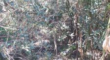 Δεν έχει καθαρίσει το ρέμα Κυρίλλου στο Μαρούσι η Περιφέρεια Αττικής