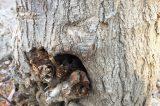 Δ. Μπίρμπας :Φύτευαν λάθος δένδρα οι προηγούμενες Δημοτικές Αρχές