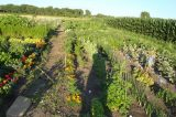 Δημοτικός Λαχανόκηπος στο Καρπενήσι