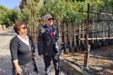 Φυτεύει 1.000 δέντρα το Ηράκλειο