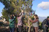 Στόλισμα δένδρων στο Πεντελικό  με βιοδιασπώμενα «στολίδια»