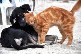 Καμπάνια του Δήμου Θεσσαλονίκης για τη σίτιση αδέσποτων ζώων
