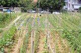 100 (!) Δημοτικούς Λαχανόκηπους  έχει ο δήμος Νεάπολης-Συκεών που πρωτοπορεί