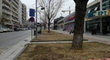 30 υπεραιωνόβια ελαιόδεντρα αντί για λεύκες στη Θεσσαλονίκη