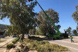 Κλαδέματα μεγάλων δένδρων από το δήμο Σαρωνικού